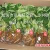 蛟河市草莓研究所供应草莓苗-吉林省吉林市蛟河市新农街道关门村