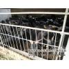 黑山羊的精粗饲料的配方湖南江西贵州重庆四川广东养羊