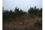 湖北省随州市万和镇有300亩桃园求合作种植药材