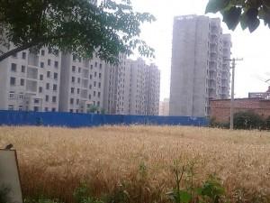 城市与农村的交错地带 (12)