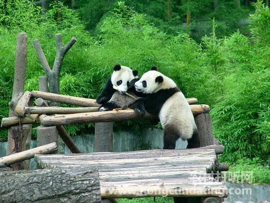这些美丽濒临灭绝的动物