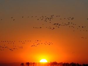 吉林莫莫格国家级自然保护区迎来候鸟北归高峰 (3)