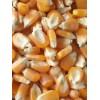 常年大量收购玉米碎米大豆高粱次粉荞麦油糠酒糟粉等饲料