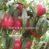 柏树苗多少钱一颗 桃树苗批发 占地桃树苗价格 梨树苗批发