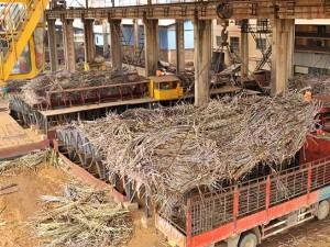 广西迎来糖厂开榨高峰期 (3)