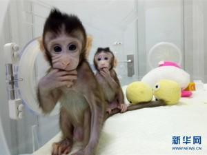 世界生命科学重大突破! 两只克隆猴在中国诞生 (14)