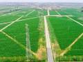 广东高标准农田建设获国务院督查激励